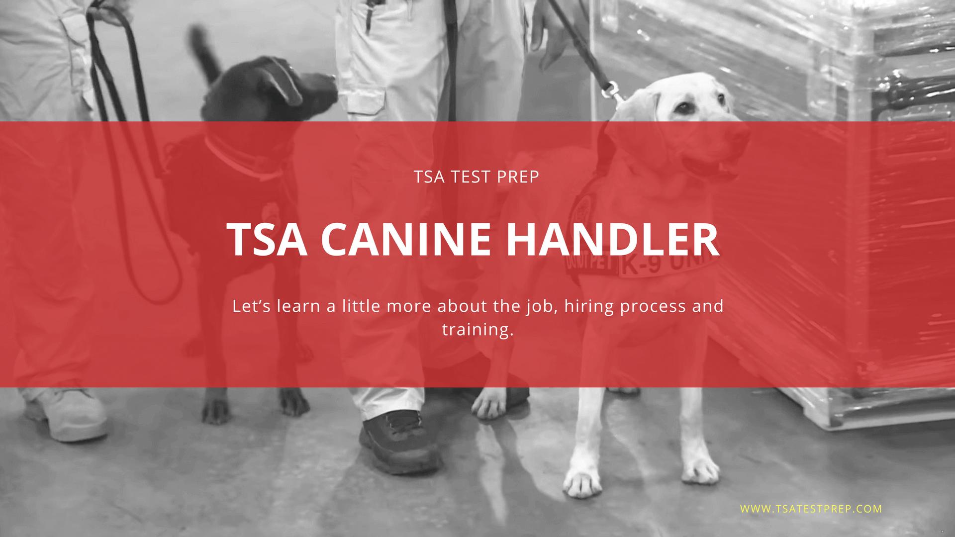 TSA Canine Handler Hiring Process: Complete Guide